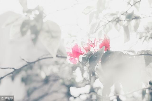 古人浪漫到极致的情话,最美情诗,诗里面的爱情